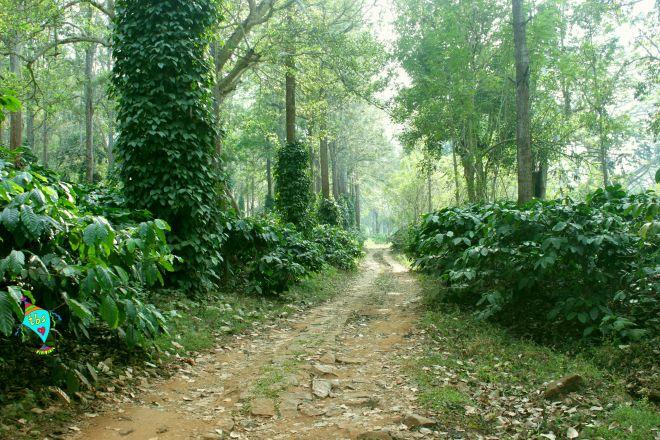 Forrest Pathway