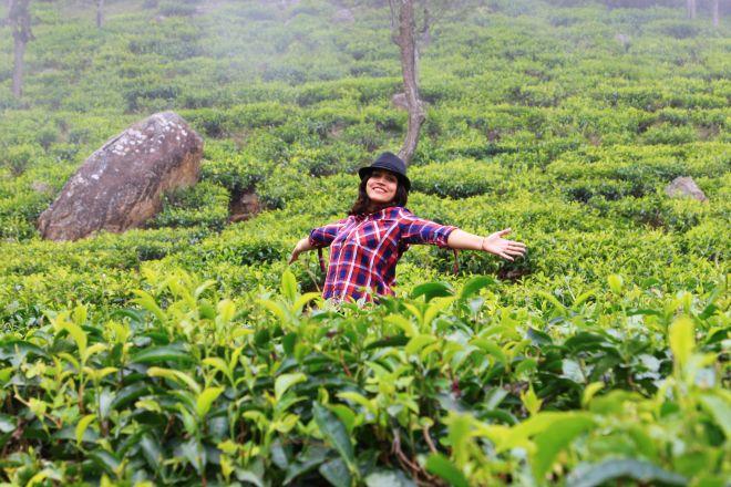 Ooty Tea Garden_3